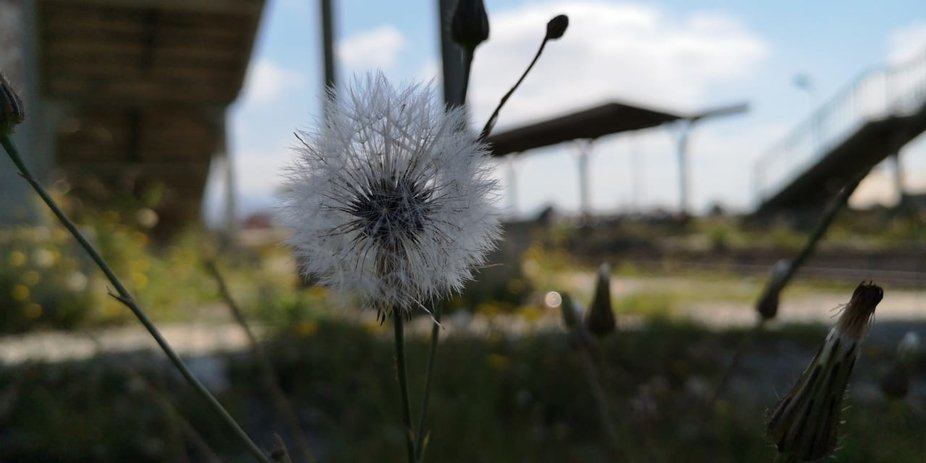I was at the train station and I saw this beautiful dandelion