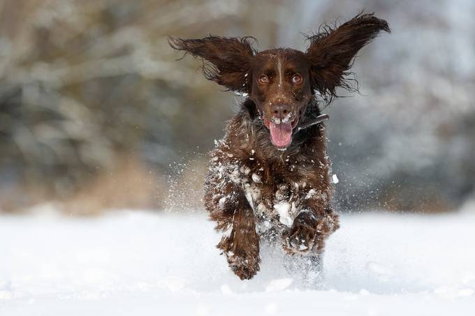 Arka by AgnieszkaDietrich - Dogs In Action Photo Contest