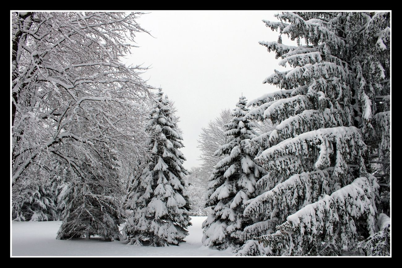 Winter Snow Art
