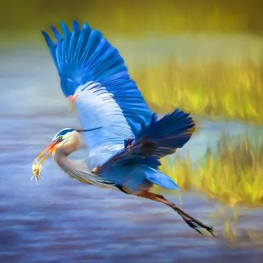 Great Blue Heron with Fish Art