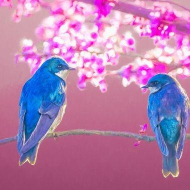 Springtime Tree Swallows