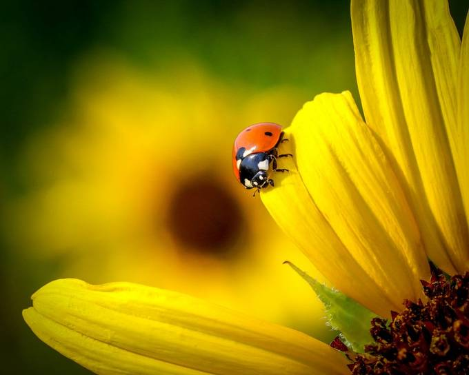 Lady on Yellow by EvaBareis - Colorful Macro Photo Contest