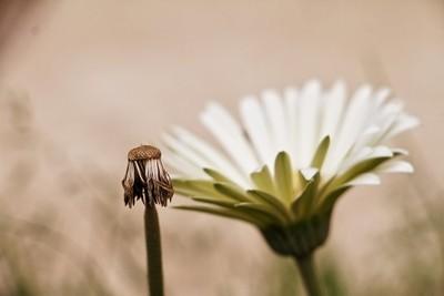 Flower +flower