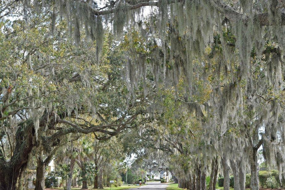 Somewhere in Parrish, FL.
