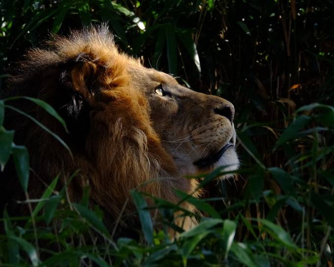 Gorgeous King by rmr731 - Image Of The Month Photo Contest Vol 42
