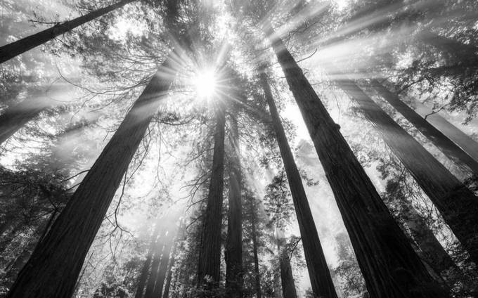 by christyhofstetter - Tall Trees Photo Contest