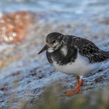 Lookin for Beasties at high tide at Nairn Beach