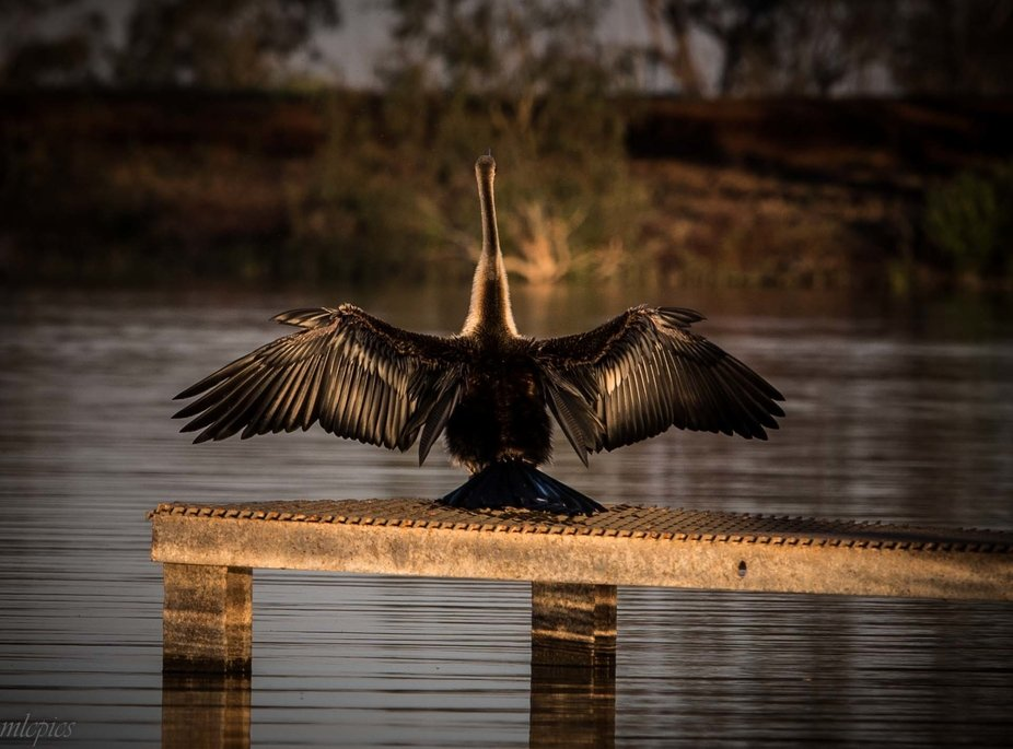 I was watching this bird for quite a while as it was feeding in the water. When he was finished h...
