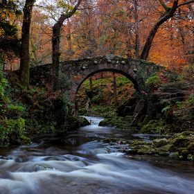 Autumn in Tollymore Forest Park