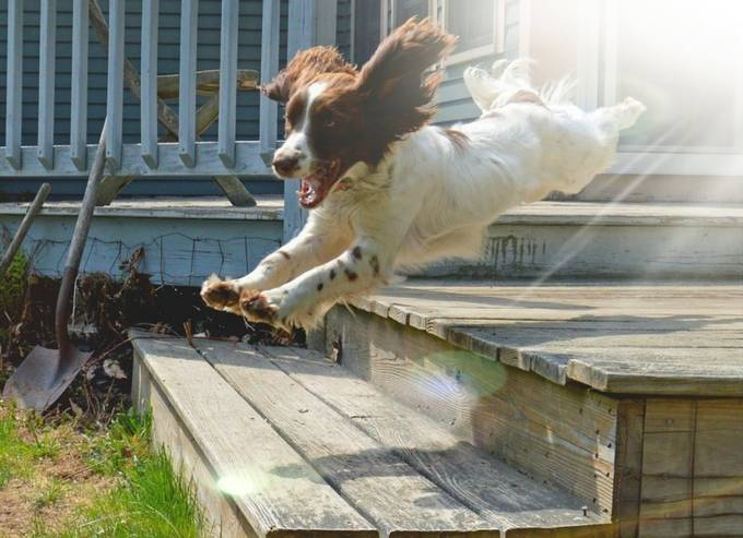 by audreykambol - Dogs In Action Photo Contest