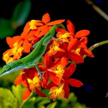 Brightness in Nature