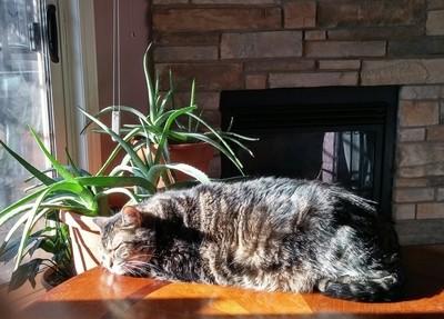 Sunbathing in December