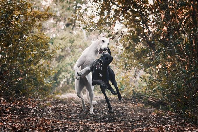 Just having fun by gonzalojimenoaguilar - Dogs In Action Photo Contest