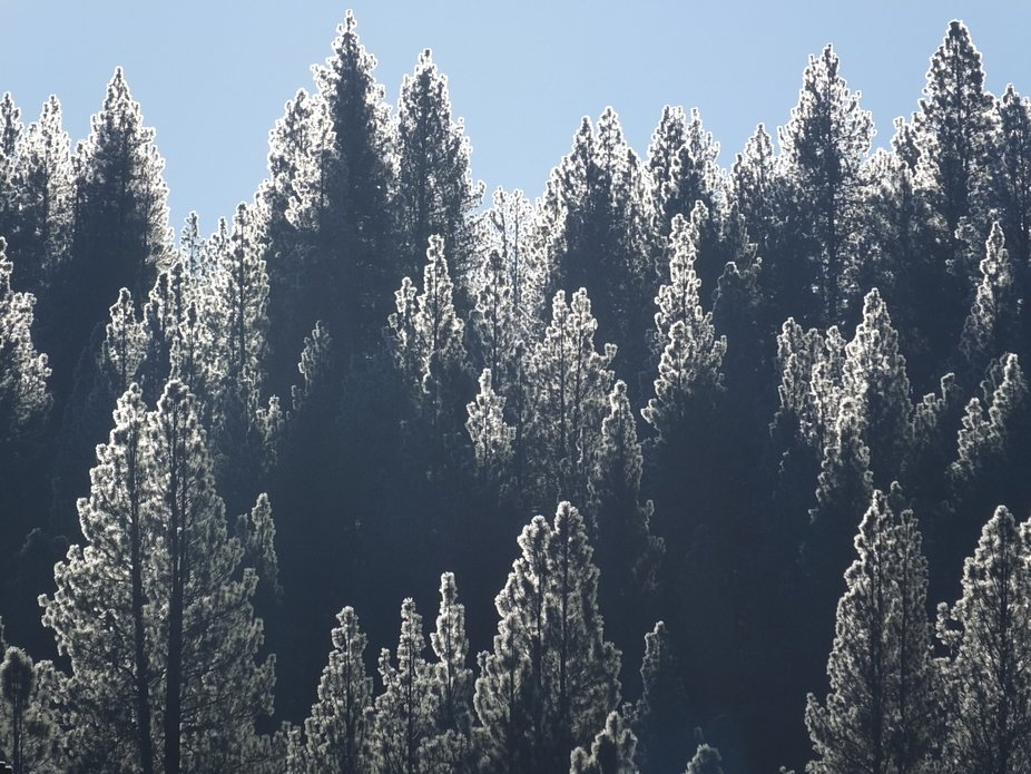 A very cold morning as the sun was coming up over the horizon and shining on the trees at the sno...