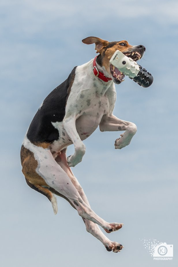 by KevinSLR - Dogs In Action Photo Contest