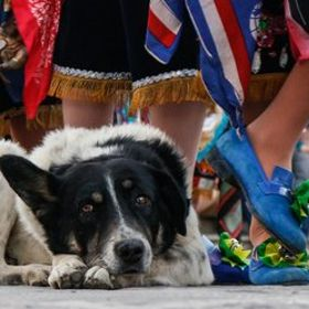 Doggo here took a cat nap during the dance festival Señor Choquequillka in Ollantaytambo Peru. I stooped to his level and found it quite enjoyab...