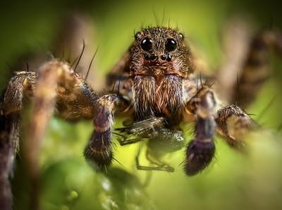 It's a Spider Eat Spider World