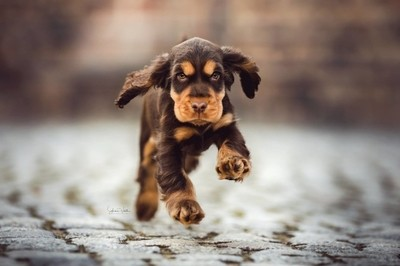 Puppy in Action