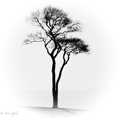 tried for a minimalist black and white image.  Reminds me of Japanese art.