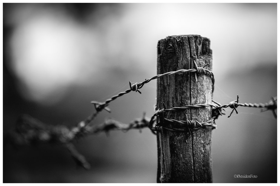 old barb wire...