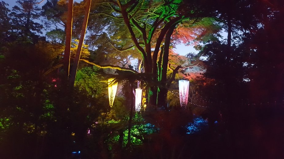 Wellington Botanical Gardens, summer lights and music