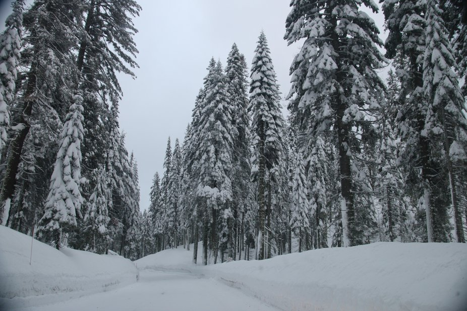 Driving into Yosemite the day after a nice snowfall.