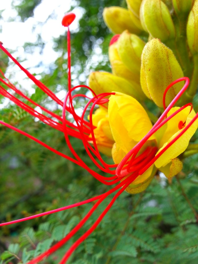 I took several hundred pictures and deleted all but a few. This incredibly beautiful flower was t...