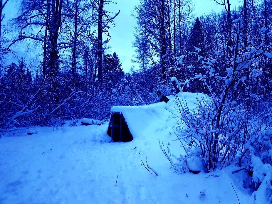 Winter Blues copy