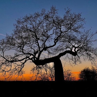 We are getting some fabulous sunsets and it's been lovely exploring our pretty, new area of #Harefield and noticing the natural beauty of the surrounding walks and countryside. I noticed this big old tree and the sun setting behind it and just had to take
