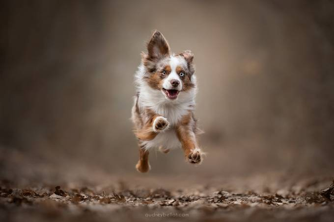 Youhou! by audreybellot - Dogs In Action Photo Contest