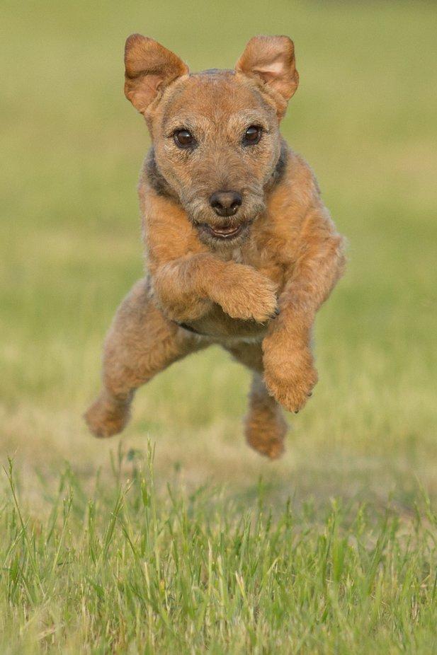 Hazel by KatrinaWilsonDogTog - Dogs In Action Photo Contest