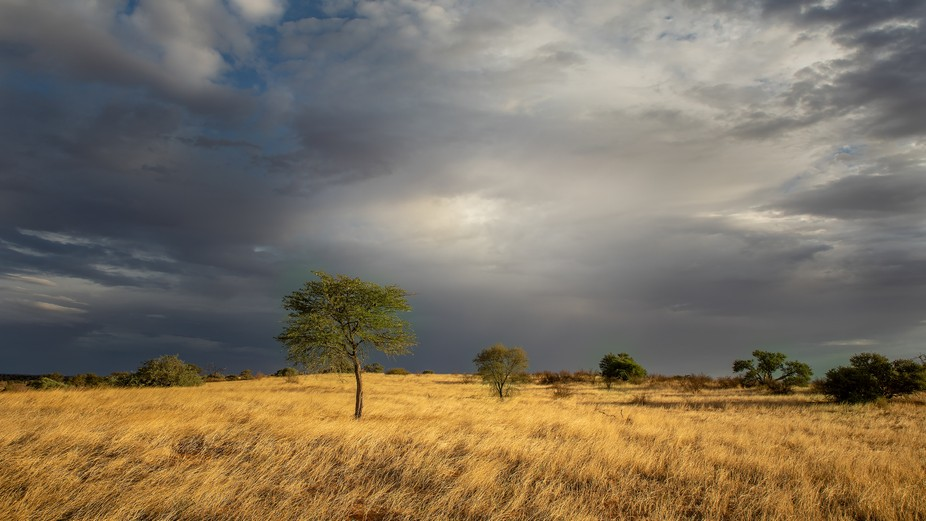 In the Kalahari desert the grass became yellow - every animal, every plant is longing for rain. A...