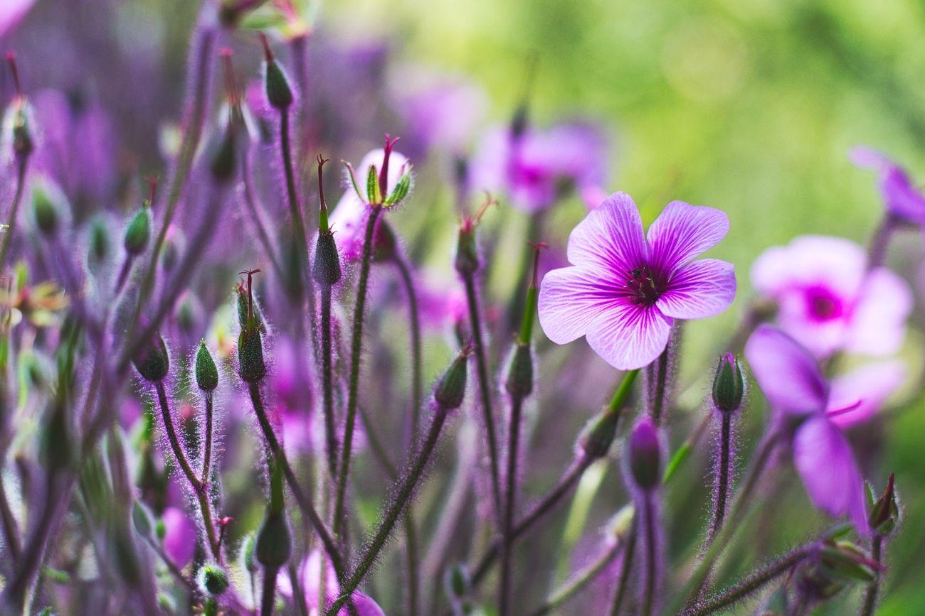 Beautiful purple flowers, enough said :)
