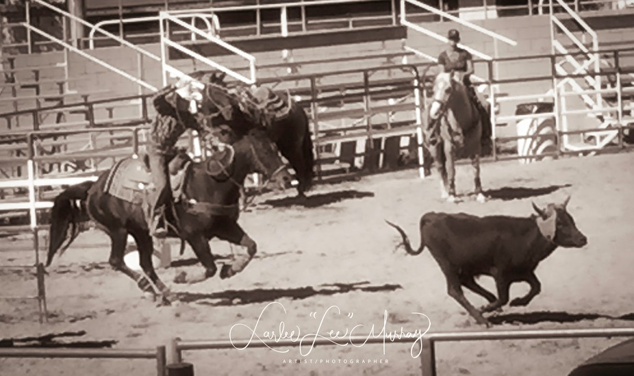 As an artist/photographer and an avid equestrian the rodeo was one of the things we fell in love with about our new home town