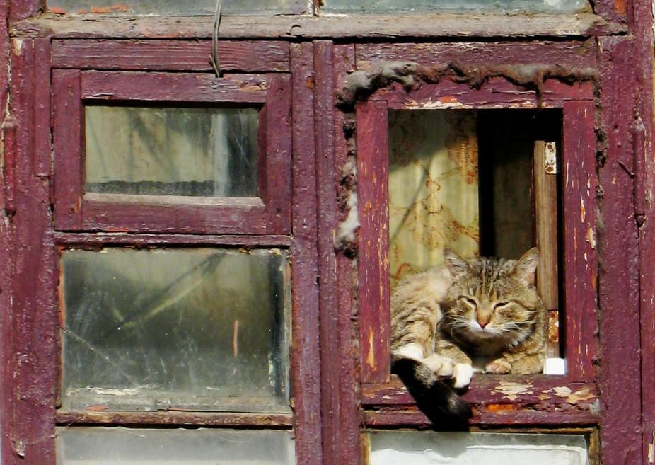 A window cat