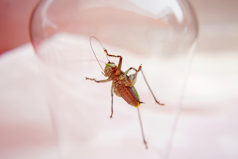 A Grasshopper in a Glass