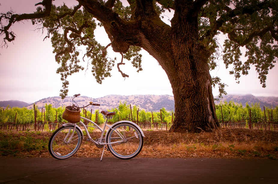 I was riding my bike on the back roads of Napa, California. I was inspired to take a photo of my ...