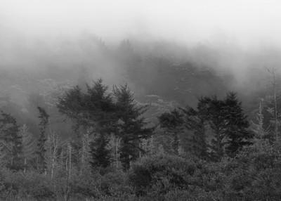 Fog Over Forest, California, 2013 b&w
