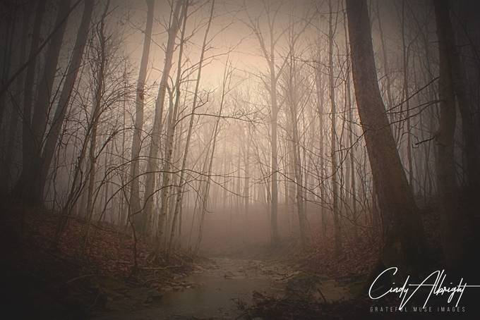 If you listen very closely on a foggy morning in the woods, you will hear the whispers of the water and trees inviting you to come in and dream.