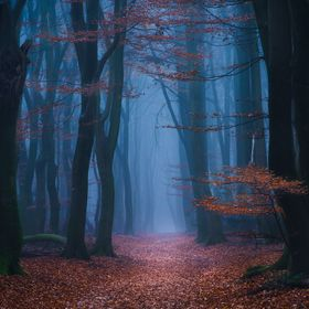 The magical forest of Speulderbos in Holland. Doesn't get spookier than this...