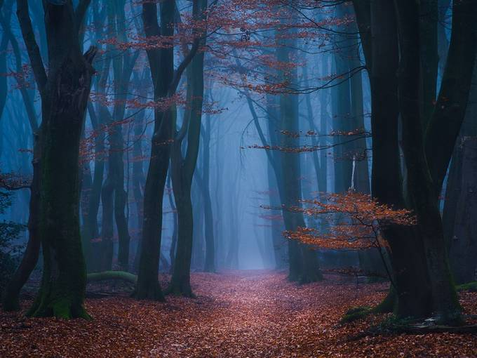 In the mist by gkossieris - Tall Trees Photo Contest