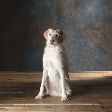 Portrait Studio session with Mature Rescue Dog