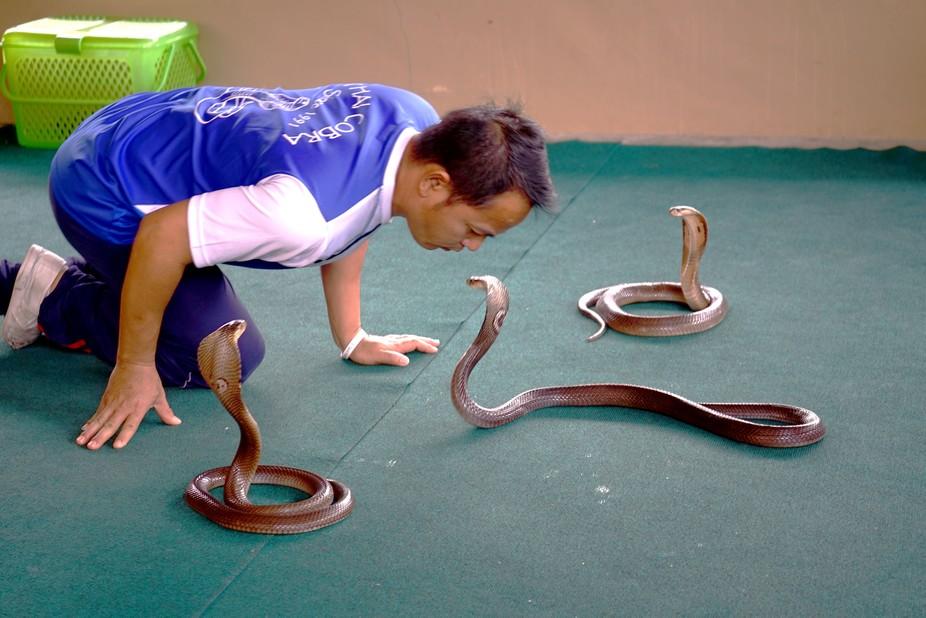 Family Snake Show