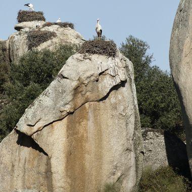 En la zona de los Barruecos en Malpartida de Caceres-Spain, las ciconias utilizan las grandes piedras para situar sus nidos