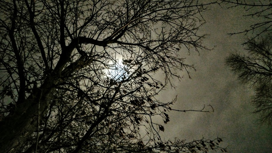 The moon parking out behind the clouds and through the tree