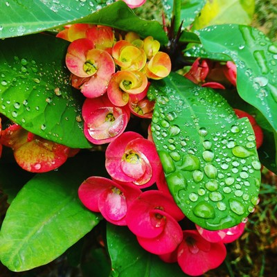 Show Flowers with Rain drops
