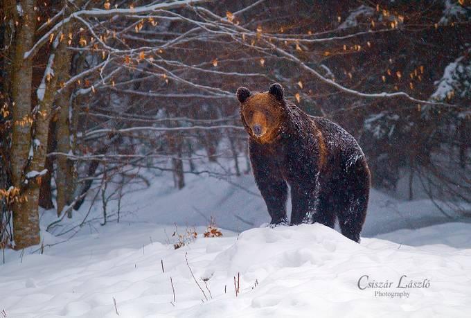 Observation point by csiszarlaszlo - Winter Wildlife Photo Contest