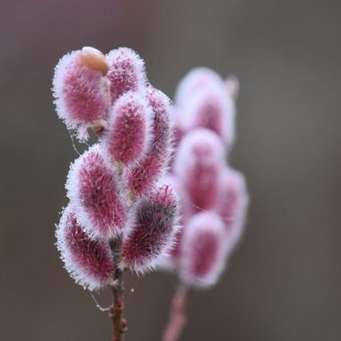 Out with my camera at Cambo Gardens Fife loving all the winter plants coming to life again