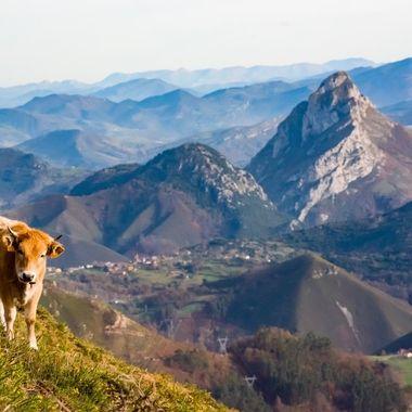 Montaña asturiana
