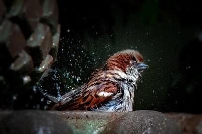 CABO SAN LUCAS BIRD BATH